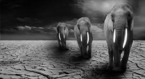 elephant-590020_640